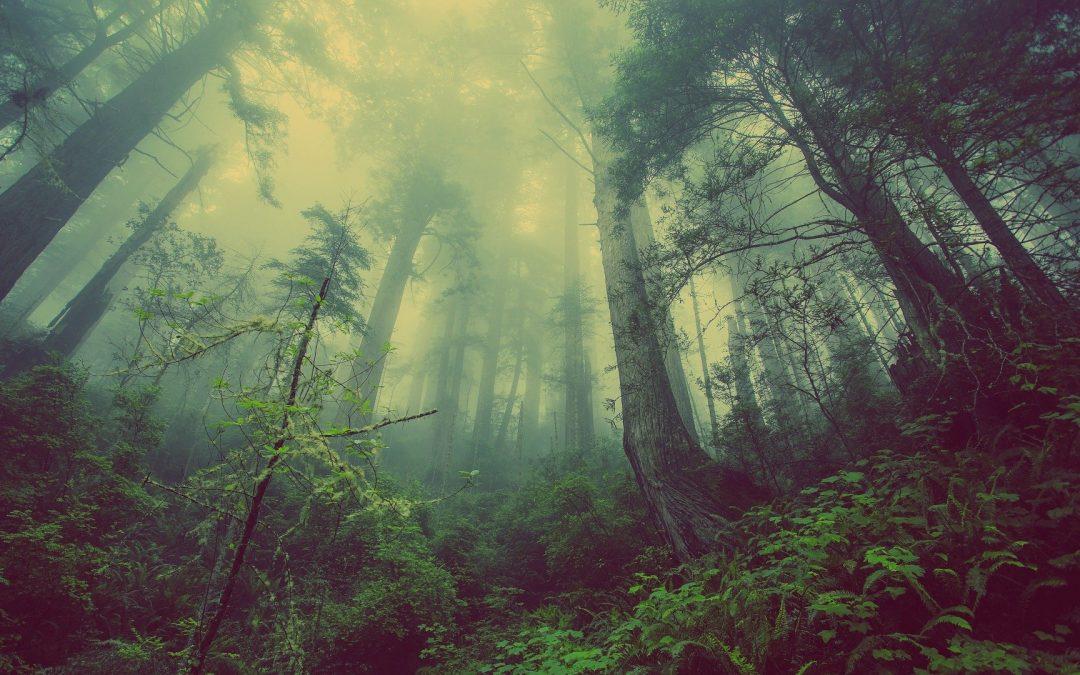 Mensajeros Azur: Concienciados con el Medio Ambiente